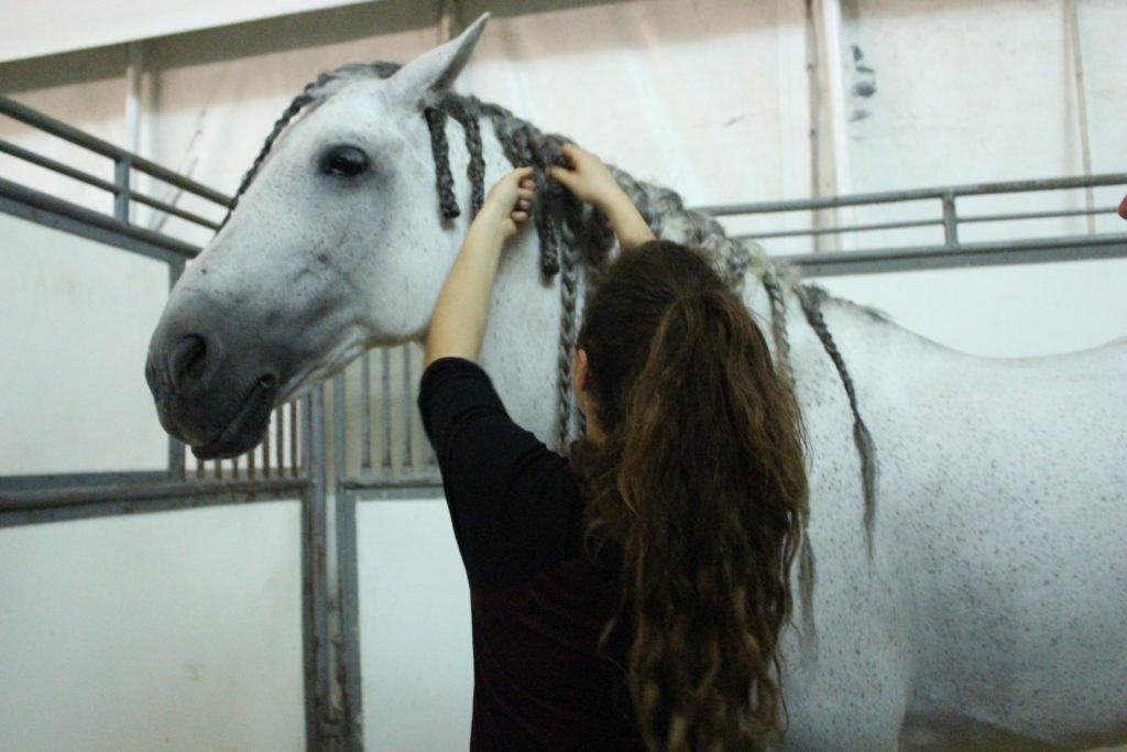 Cavalia VIP horse braiding